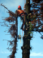 Getting Council Approval to Remove a Tree