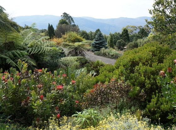 Blue Mountains Botanic Gardens