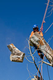 Tree Removal in Sydney