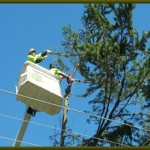 Tree Pruning Near Power Lines