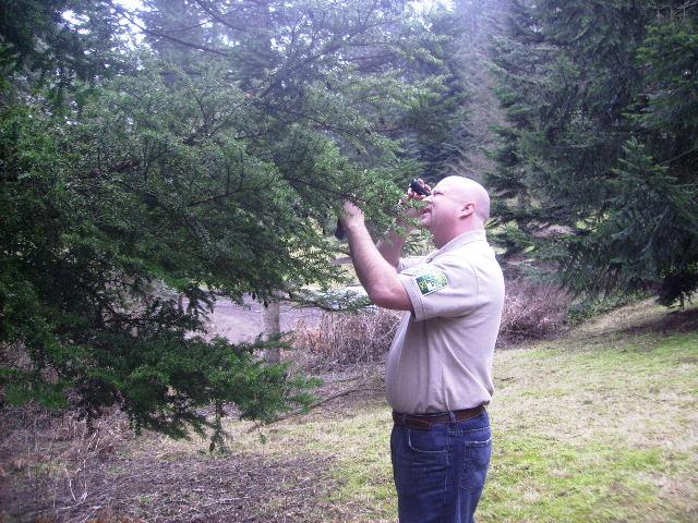 arborist-inspection
